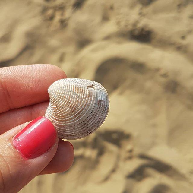 Den ersten Schatz hab ich auch schon gefunden. 🌊🌴☀️❤ #meerliebe #daslebenistschön #urlaubsmodus #diepetzi