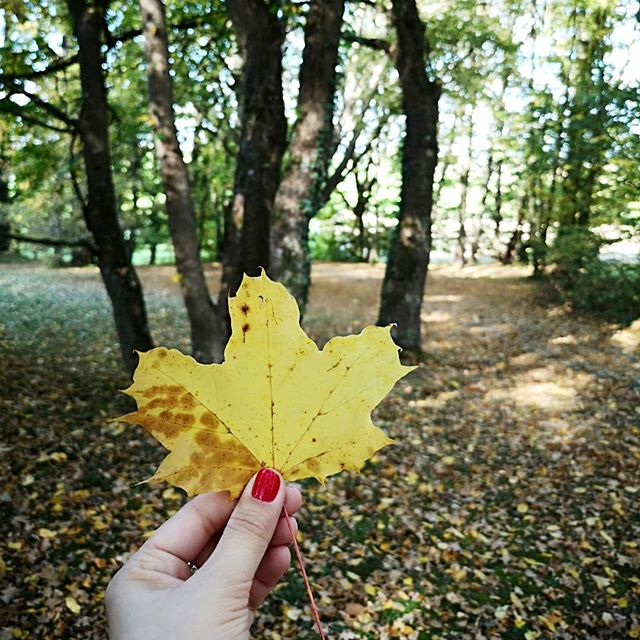 """Hach Herbst! Eigentlich bin ich ja mehr der Sommerfan, aber wenn er so schön ist, dann kann ich auch mit dem Herbst was anfangen. Heute war ich mal wieder daheim, hab einen ausgiebigen Spaziergang gemacht (in den Stories nehm ich euch an den besonderen Ort mit) und die Seele baumeln lassen. Und während ich ausführlich Laub begutachtet habe und Eicheln und Kastanien gesammelt habe, war ich plötzlich wieder Kind. Völlig entspannt, komplett losgelöst von allem """"Stress"""" den ich mir die letzten Tage gemacht habe. In dieser Woche habe ich also bereits zwei neue Erkenntnisse getroffen. Zum einen wieder viel öfter alleine in Cafés gehen und Menschen beobachten und zum anderen wieder viel öfter heimfahren, die Gegend neu erkunden und für eine kurze Zeit wieder Kind sein. Habt noch einen wundervollen #Sonntag! . #herbst #gedankenliebe #gedanken #diepetzi #herbstliebe #sonntagsmodus #keinebücher #trotzdemgutfürdieseele #momentaufnahme"""