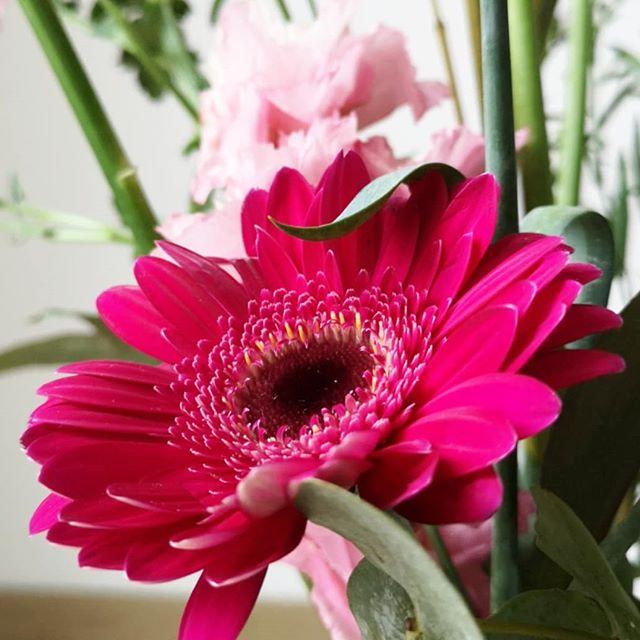 """Ein wenig Farbe an diesem grauen Montag für euch. Kommt gut durch und startet hoffentlich gut in die neue Woche. Und denkt dran: """"Ein paar Minuten Auszeit mitten im Alltag können mehr beleben als eine ganze Reihe freier Tage."""" (Ingrid Koller) #blumen #flowers #diepetzi #motivation  #montagsgedanken"""