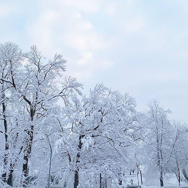 Guten Morgen. Hier in München liegt wieder richtig viel Schnee. ❄️ Wie siehts bei euch aus? Kommt gut in die neue Woche und habt einen tollen und stressfreien Montag. ☕ #diepetzi #winter #winterwonderland #montagsfreuden