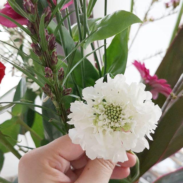 Samstag ist auf jeden Fall mein Lieblingstag. Und Samstage, an denen ich Lieblingsmenschen treffe sind es erst recht. Ich freu mich auf einen schönen Abend und hoffe morgen auf einen ebenso sonnigen Tag mit ganz viel Frühlingsfeeling. Was habt ihr heute geplant? . #flowers #flowerlove #blumen #blumenliebe #diepetzi