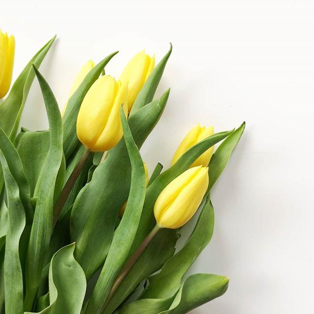 """Auch wenn das Wetter heute nichts mit gestern zu tun hat, lass ich mir die Laune nicht verderben. Ich bin absolut im Frühlingsmodus. Nichts passt da besser als frische Tulpen. Heute morgen hab ich übrigens mit """"Kurt"""" angefangen und bin nach etwas mehr als 50 Seiten schon schwer begeistert vom neuen Roman von Sarah Kutter. Ich wünsch euch einen fabelhaften Tag. 🌼🌷 #frühlingsmodus #tulpen #tulips #diepetzi"""