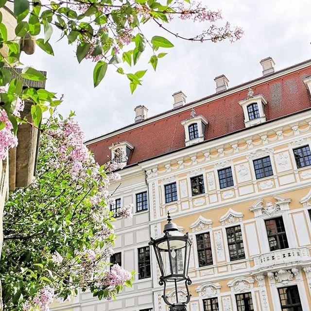 Wenn ich es mir aussuchen könnte, dann wäre ich jetzt nicht im Büro. Gerade hab ich richtig #fernweh und hätte Lust auf einen Roadtrip durch Deutschland. Dresden würde ich auf jeden Fall nochmal mitnehmen, weil es da echt schön war. . Ich mag München hier übrigens auch echt unglaublich gern, aber auch Hamburg liegt hoch im Kurs. Welche ist denn eure Lieblingsstadt in Deutschland? . #roadtrip #fernweh #explore #dresden #städtetrip #rundreise #diepetzi #schönedinge #schönestädte #instadaily #instalife